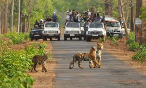 Tadoba Tiger Pench National Park