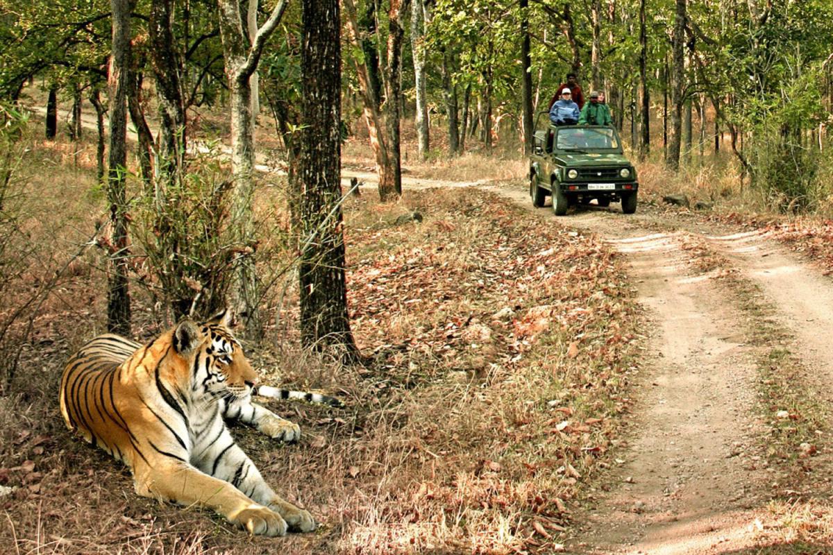 HODELETE HFA Bandhavgarh National Park. (Courtesy of Madhya Pradesh Tourism/MCT)