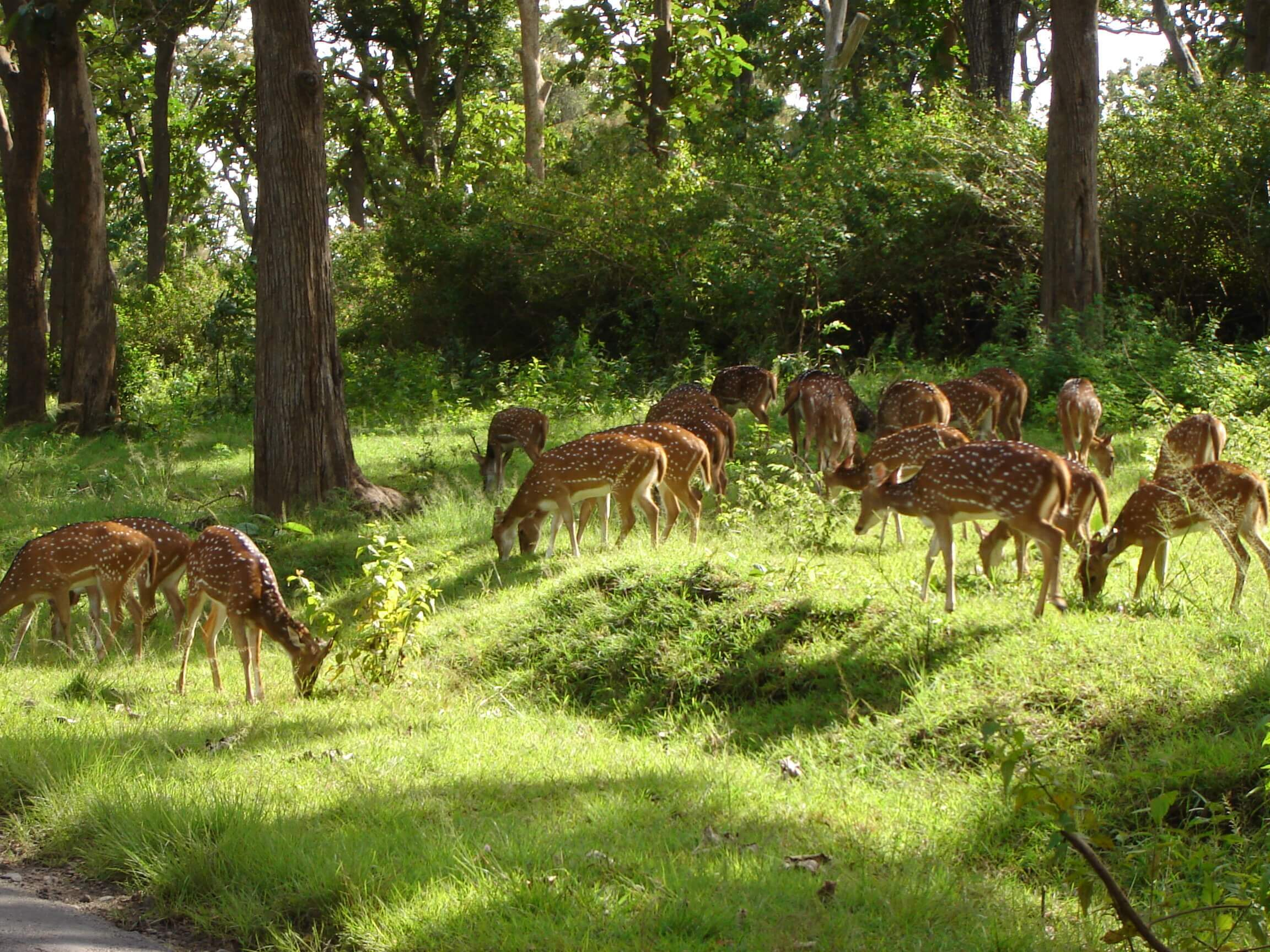 Mudumalai National Park Mysore