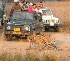 Gypsy Safari Ranthambore