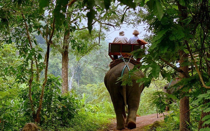 Elephant Ride - Pench National Park