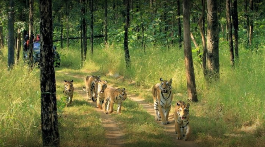 Jungle Safari Pench National Park