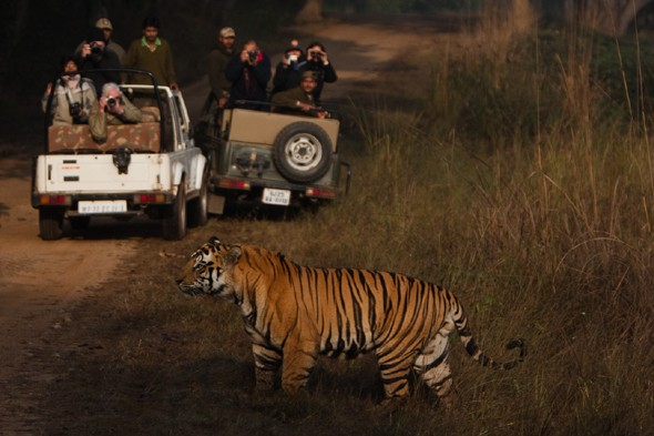 Night Safari - Pench National Park