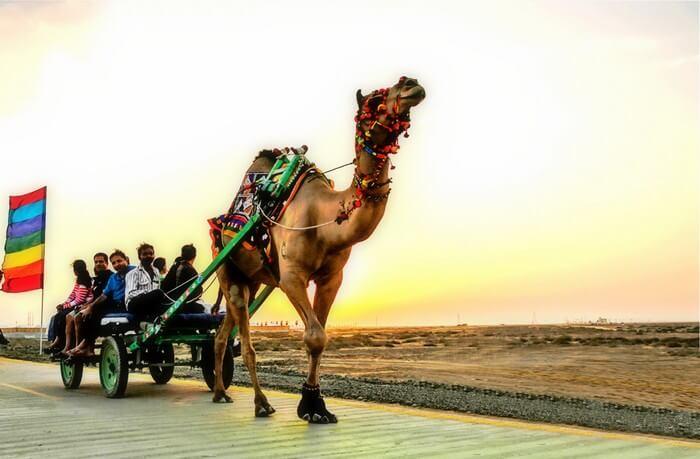 Camel Safaris and Carts