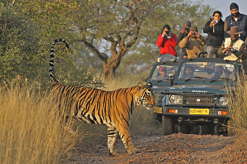 Sawai Madhopur National Park
