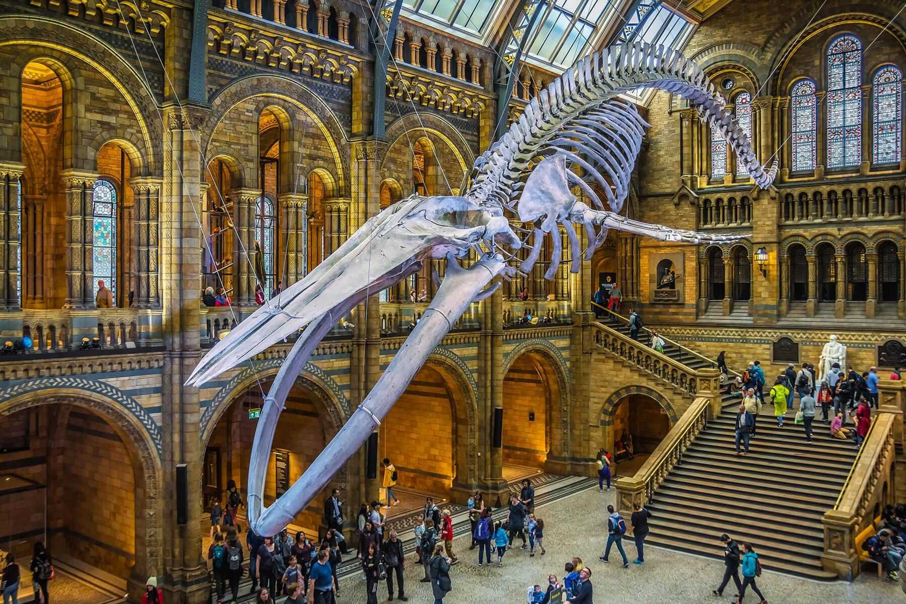 the-natural-history-museum-london