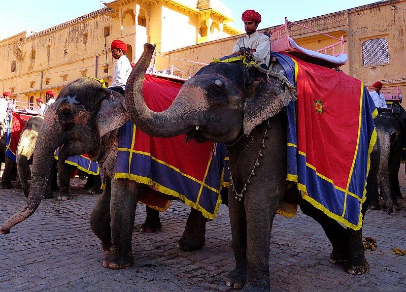 Jaipur-elephat-safari-in-fort