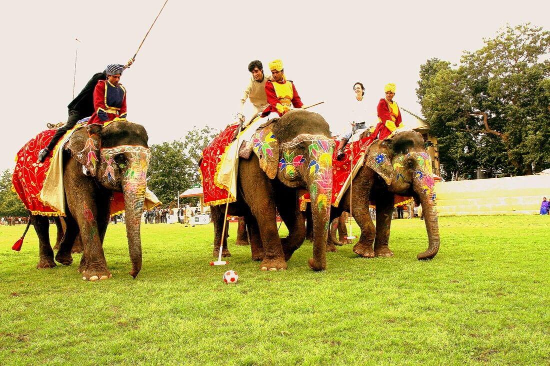 Elephant festival polo game