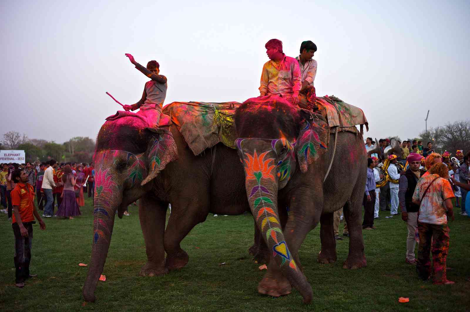 Jaipur holi Elephant Festival